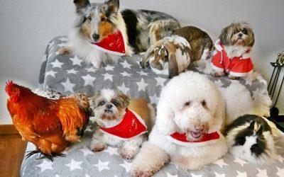 Tierische Therapeuten beschenken Tierheim