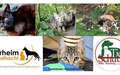 Petition für eine Katzenschutzverordnung