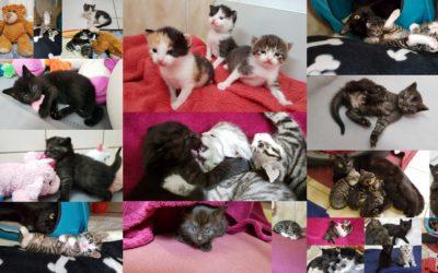Ein kleiner Einblick in unsere Kittenstube