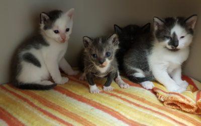Peggys Kitten