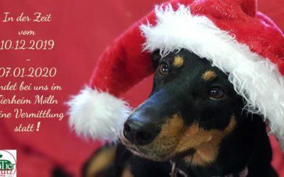 Keine Tiere unter dem Weihnachtsbaum !!! – Vermittlungsstopp