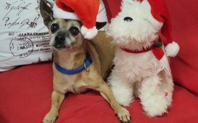 Weihnachten für Tiere im Tierheim
